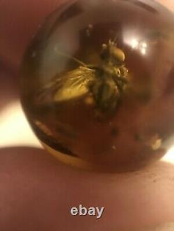 RARE FLY Natural old Baltic amber stone sphere